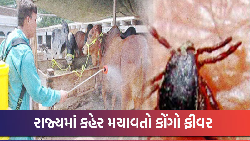 So far 22 cases of Congo Fever have been reported in Ahmedabad