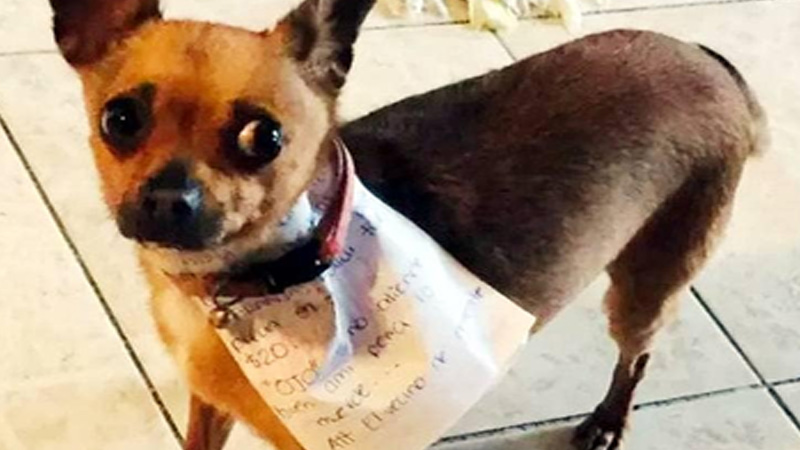 brave dog helps owner during lockdown in mexico covid 19 corona