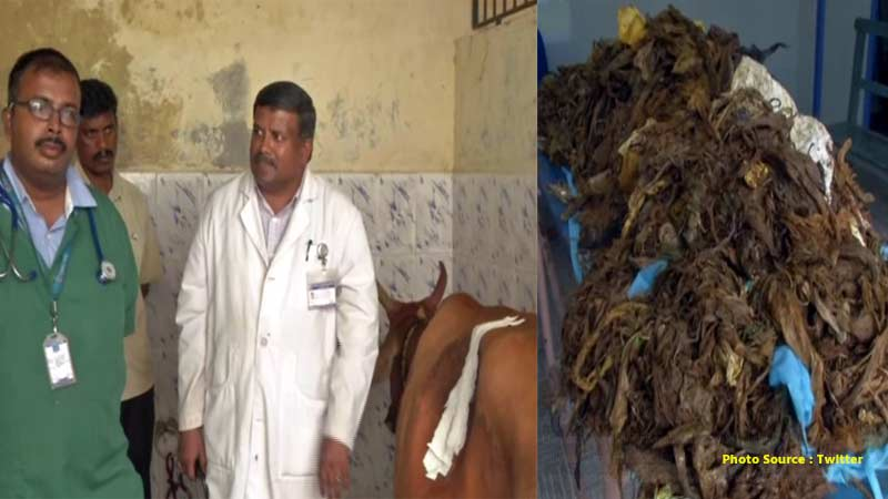 Tamil Nadu Doctors remove 52 kg plastic from cow stomach