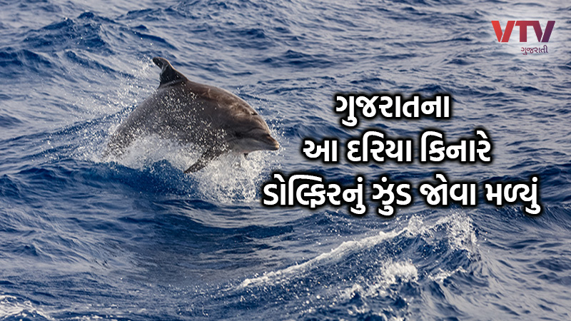 dolphin in porbandar