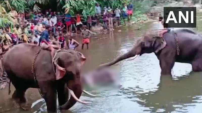 Pregnant wild elephant dies in kerala after cracker filled