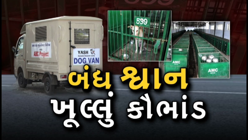dog sterilization scam ahmedabad municipal corporation