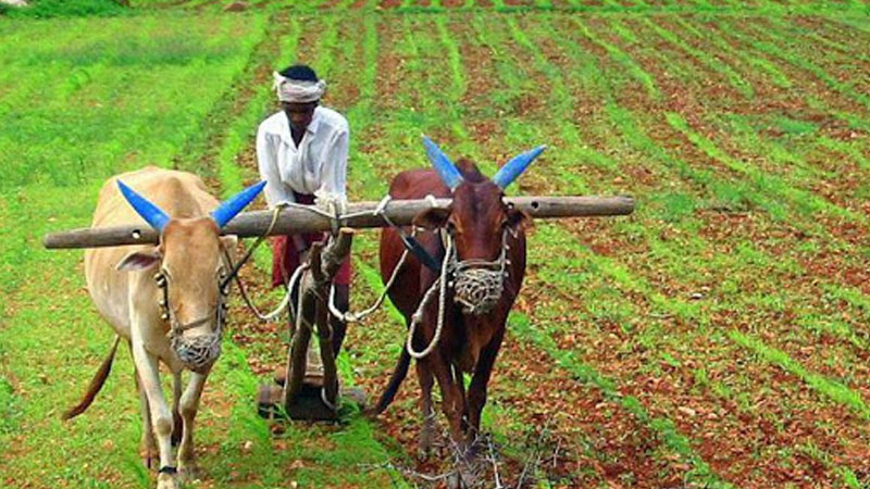 gehlot government will give grant  of 12 thousand rupees annually to farmers on electricity bill