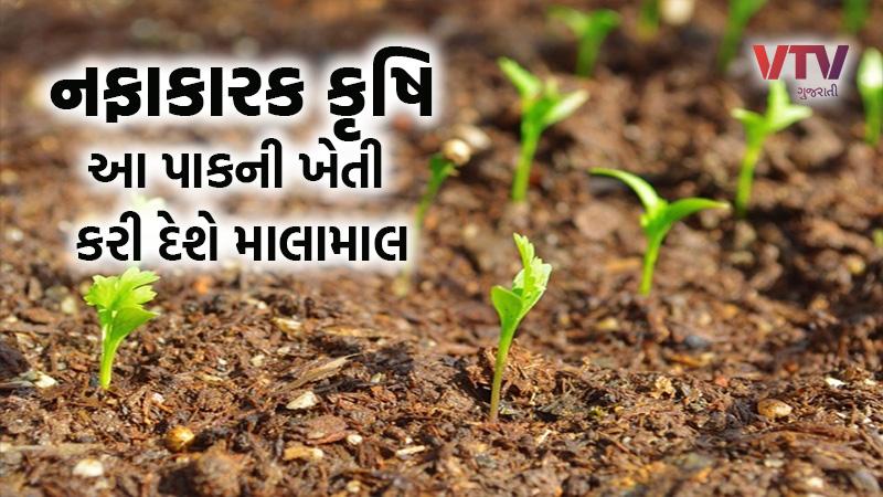 coriander cultivation profit