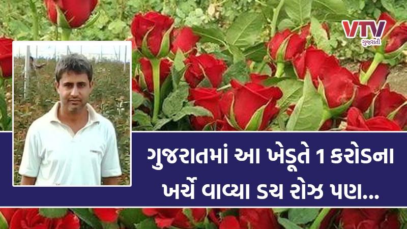 Vtv Exclusive dutch rose cultivation in Gujarat