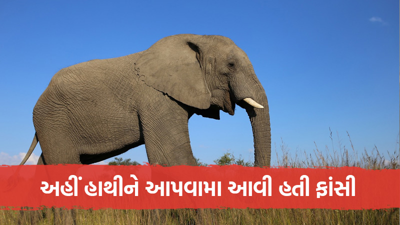 The Town That Hanged An Elephant