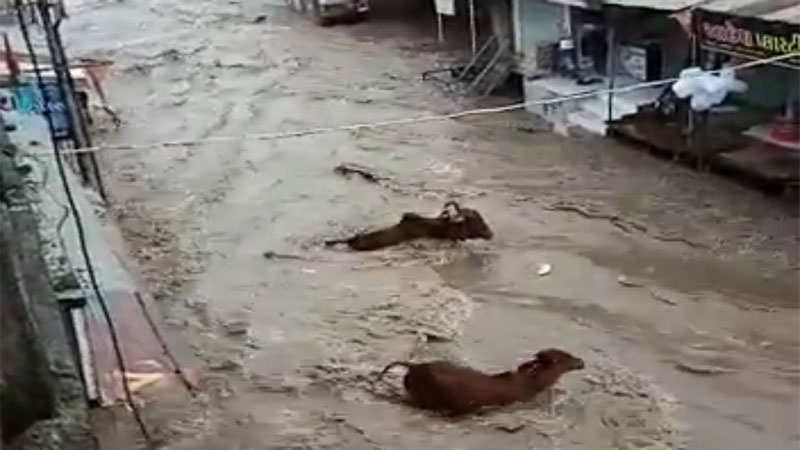 gujarat amreli shetrunji river 10 animal Strain in water video viral