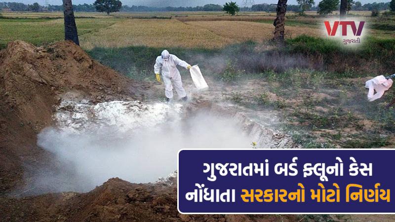 Bird Flu Has hit Gujarat, Big decision of Gujarat government