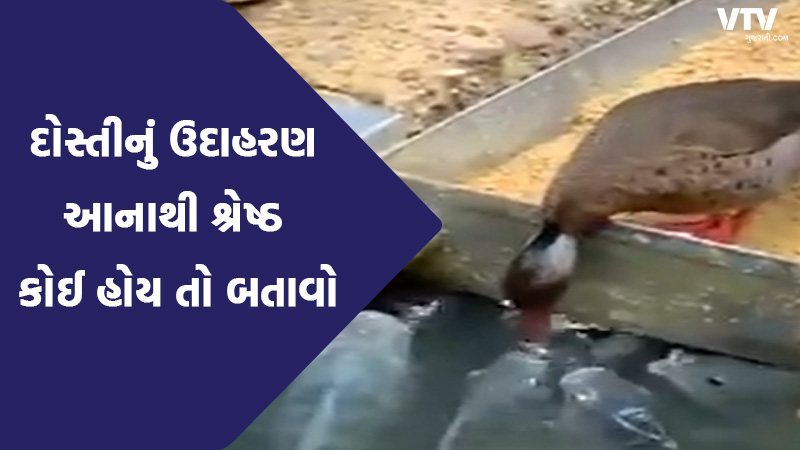 video of duck feeding grains to fish getting viral