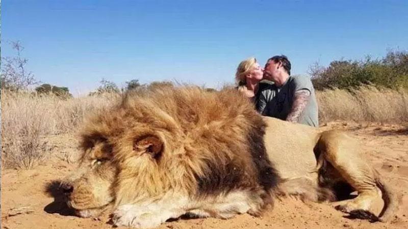 Canadian couple shamed for kissing behind dead lion in safari