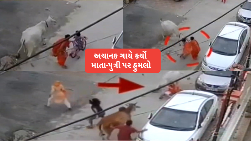 Cow suddenly attack mother daughter video viral Gujarat