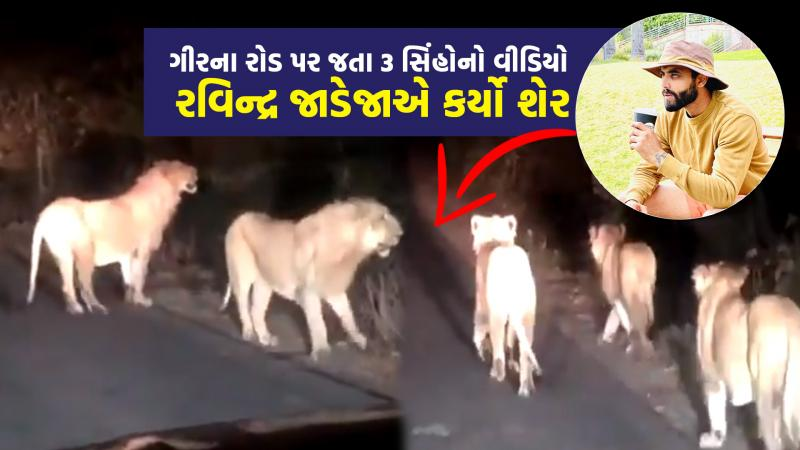 cricketer ravindra jadeja enjoying holiday sasan gir lions video