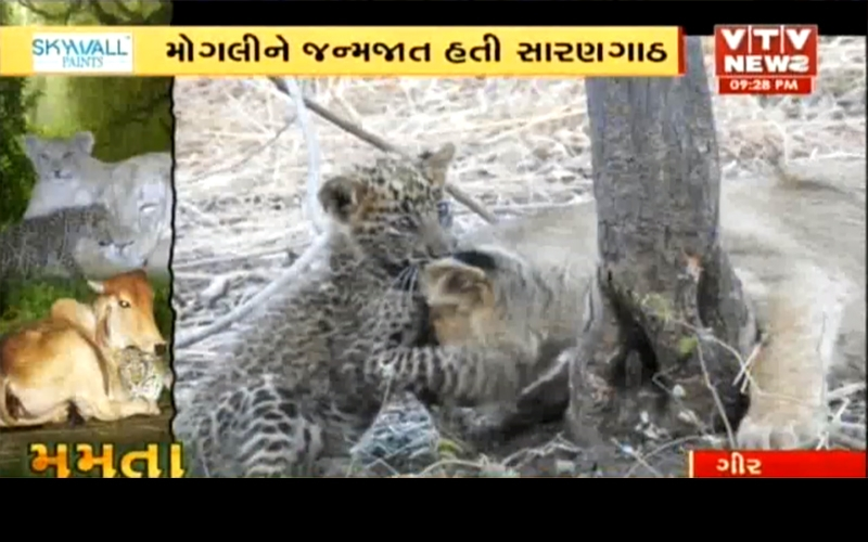 see-the-amazing-love-between-two-animals-in-gujarat