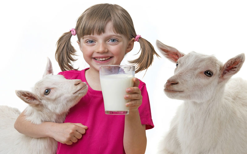 research claims these benefits given to goats milk children