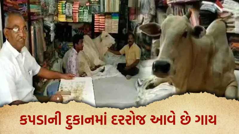 Cow Visits Garment Store Every Day In Andhra pradesh