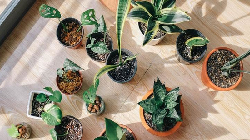 Tips to take care of indoor plants