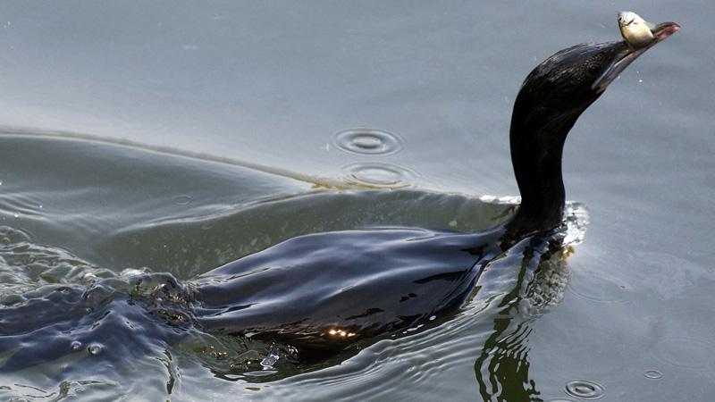 assam oil leak threat to national park wetlands hundreds of animals fish died
