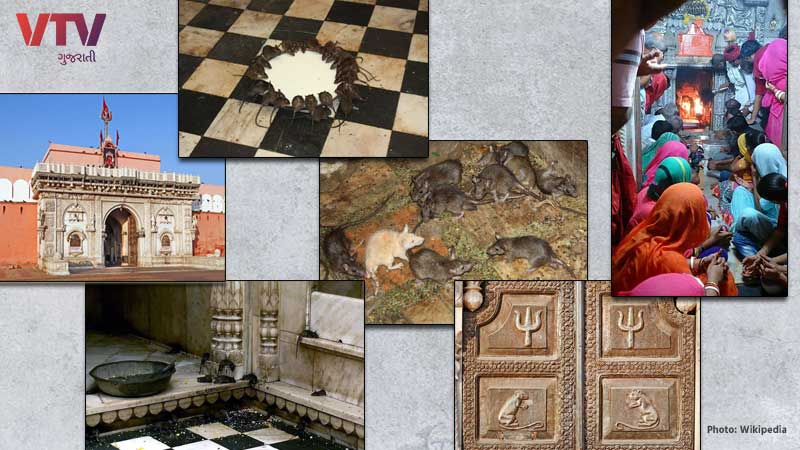 karni mata temple with rats located in bikaner video and story