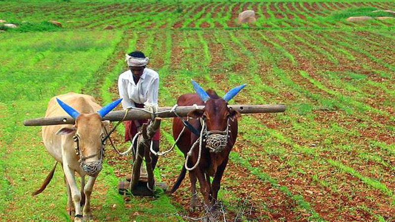 modi governments big decision now nano urea liquid will be produced on a large scale regarding farmers amid
