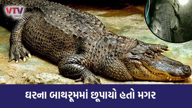 5 foot long crocodile found in bathroom