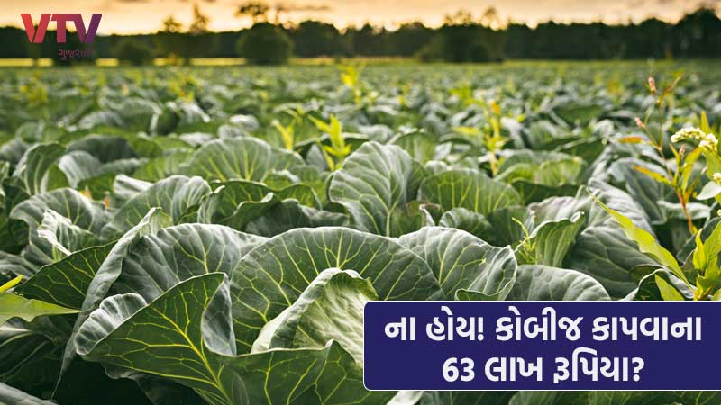 UK Firm Offers Rs 63 Lakh Annual Salary To Pick Cabbage And Broccoli