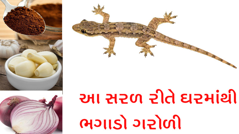 Simple Home Remedies to Get Rid of Lizards from Home