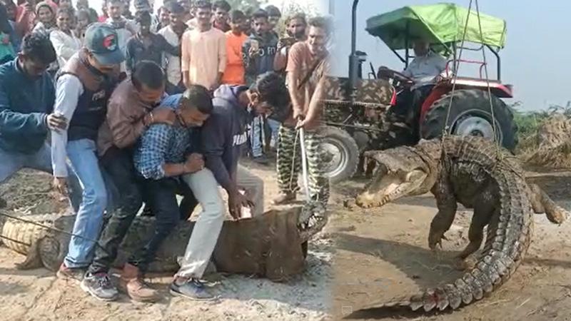 biggest crocodile rescue residential areas aasoj villages Vadodara