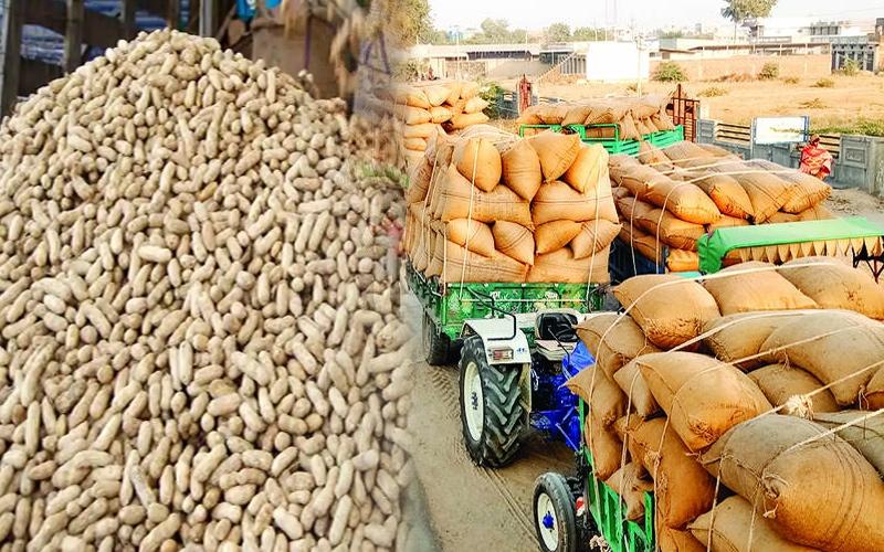 મગફળીના ખેડૂતો માટે રાજ્ય સરકાર દ્વારા લેવાયો મહત્વપૂર્ણ નિર્ણય