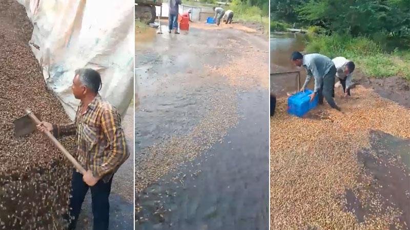 Groundnut Washing Farmer viral video gir somnath gujarat