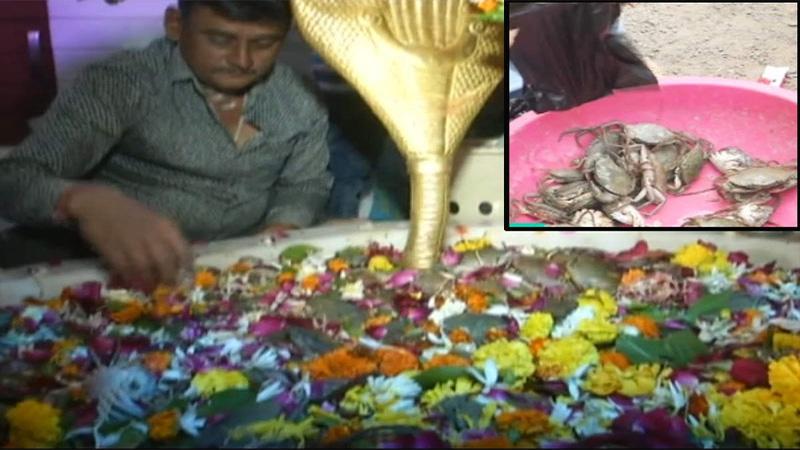 Surat Ramnath Ghela mahadev mandir live crabe in pooja