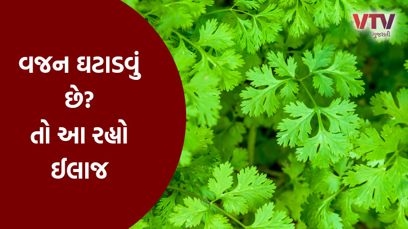 weight loss use coriander water in early morning health benefits