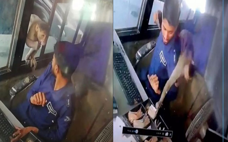 monkey-steals-money-from-toll-paza-of-kanpur-watch-viral-video