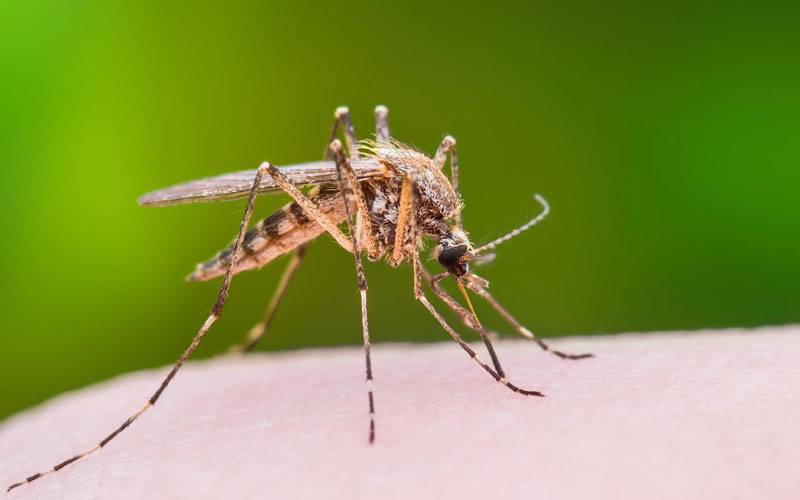 how to ward off mosquitoes at home