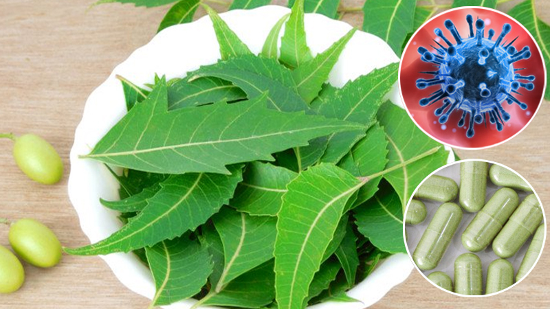 AIIA and Nisarga Herbs to conduct clinical trial on COVID-19 prevention with Neem capsules