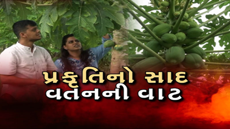 Couple leaves job in us and doing organic farming in Gujarat