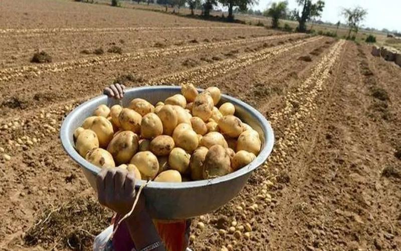 Case of PepsiCo Farmers' care, Modasa MLA Fierce agitation
