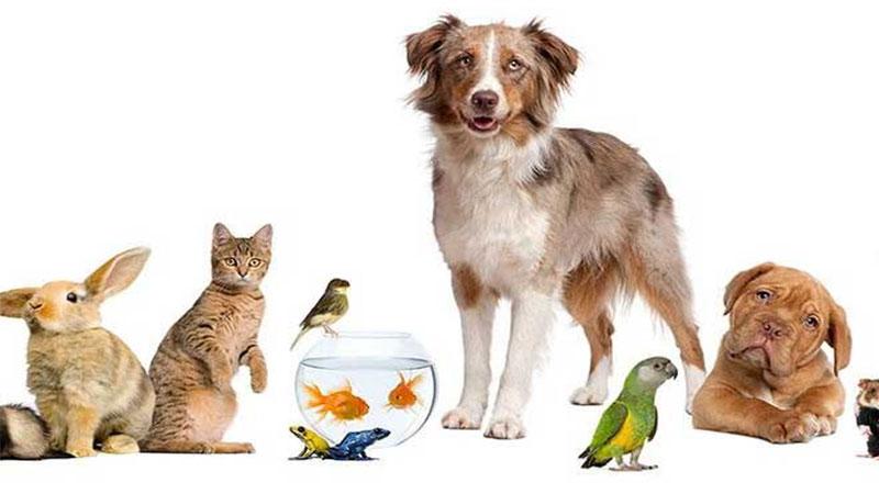 feng shui tips to keep pet birds