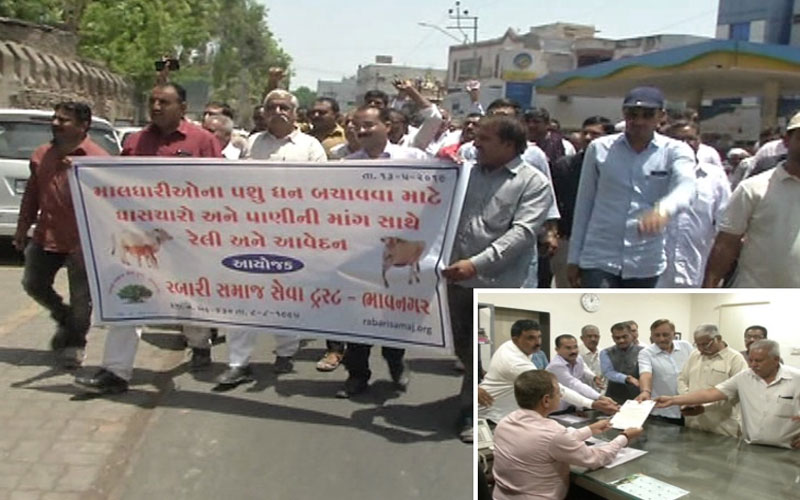 Water and fodder shortage bhavnagar maldhari rally