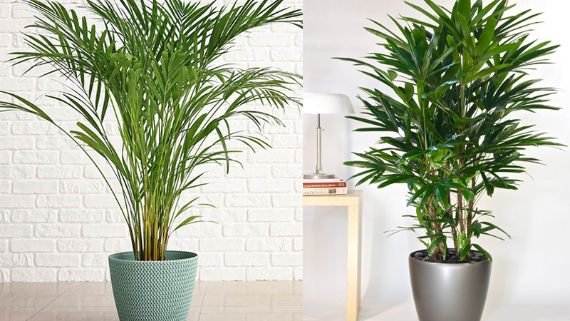 plants that purify air and keeps away diseases