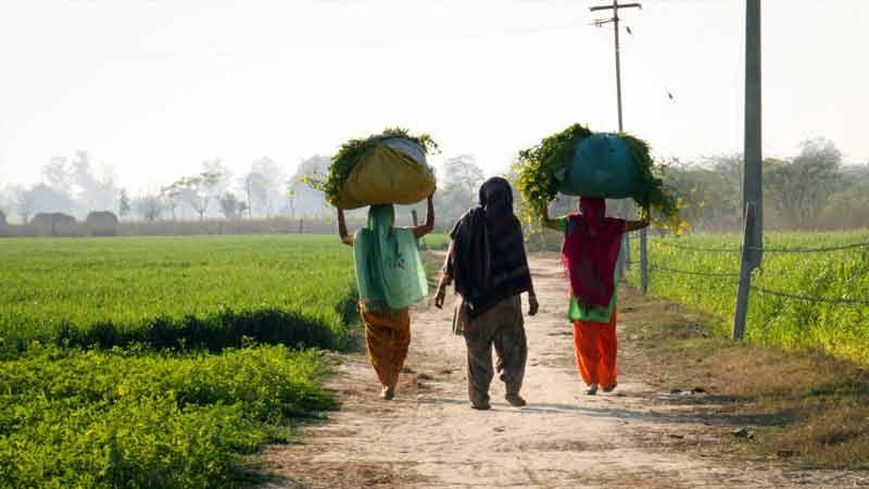 punjab farmers women work their absence
