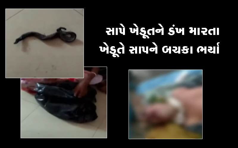 snake bits after being bitten by farmer in panchmahal