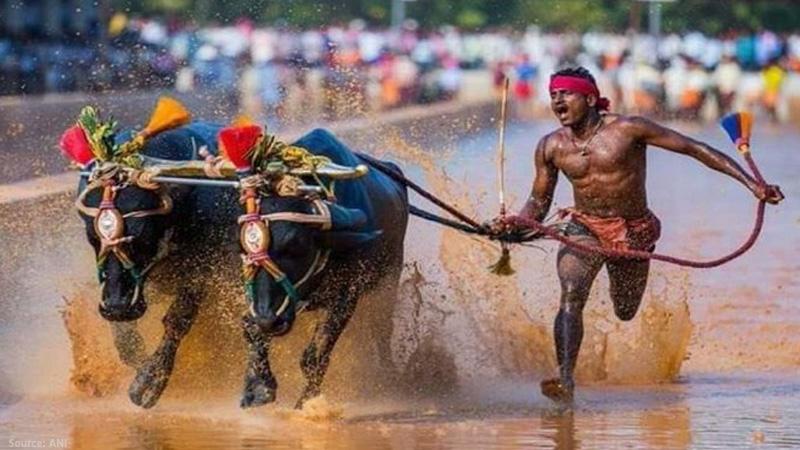 kambala jockey srinivas gowda refuses to undergo sai trials