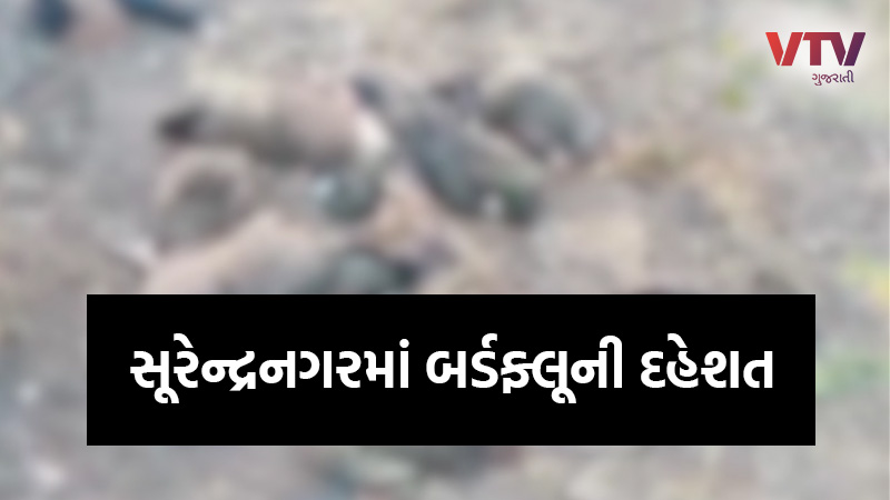 bird flu in surendranagar Gujarat
