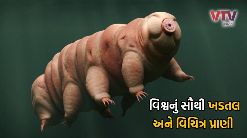 Worlds most strange creature tardigrade