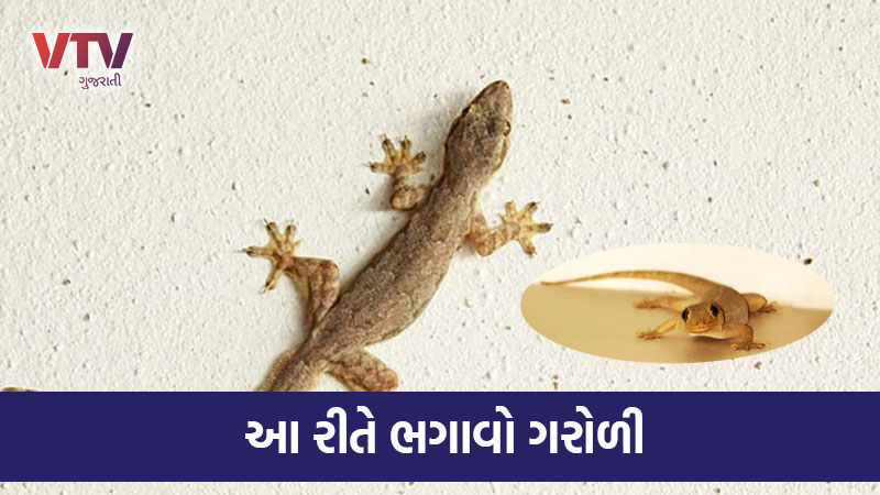 How to get rid of lizard in monsoon