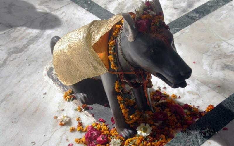 એક એવું મંદિર જ્યાં ભગવાનની નહીં કૂતરાંની થાય છે પૂજા