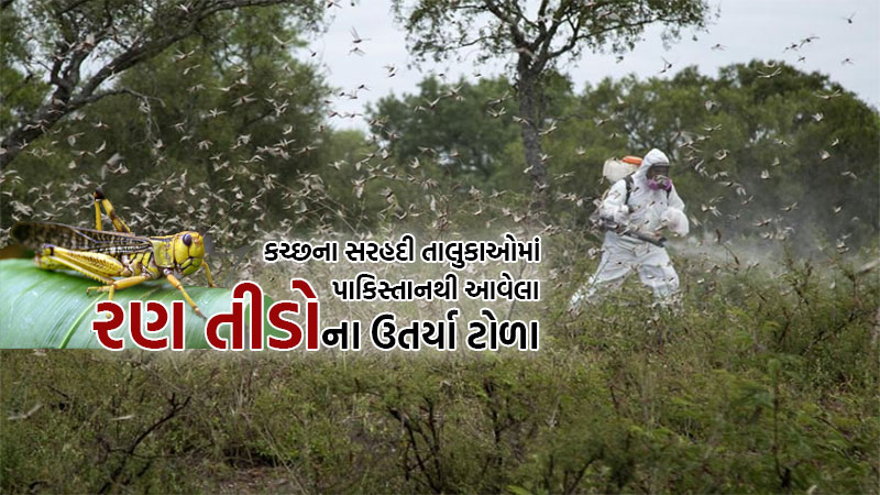 Locust swarms descend on Kutch villages