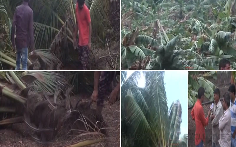 Farmers bananas, mangoes coconut crops damaged gir somnath gujarat vayu cyclone