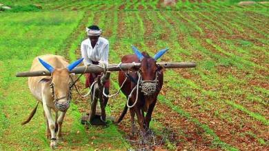 આનંદો...!  આ શહેરનાં ખેડૂતોનાં ખાતામાં જમા થશે આટલાં રૂપિયા
